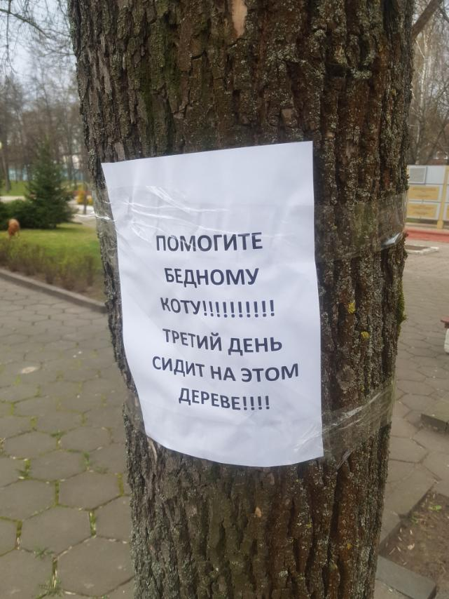 «Помогите бедному коту!!! Третий день сидит на этом дереве!!!». Мы помогли, теперь ищем хозяев