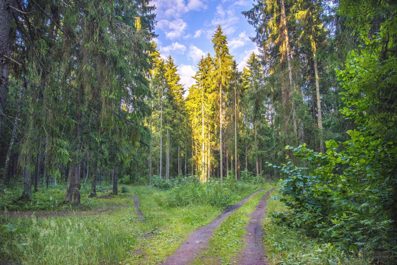 Клещей боятся – в лес не ходить?! Не проходите слишком близко мимо.