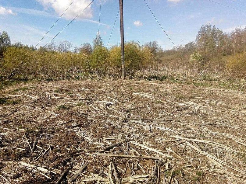 Работники филиала «Полоцкие электрические сети» ведут активную борьбу с борщевиком Сосновского