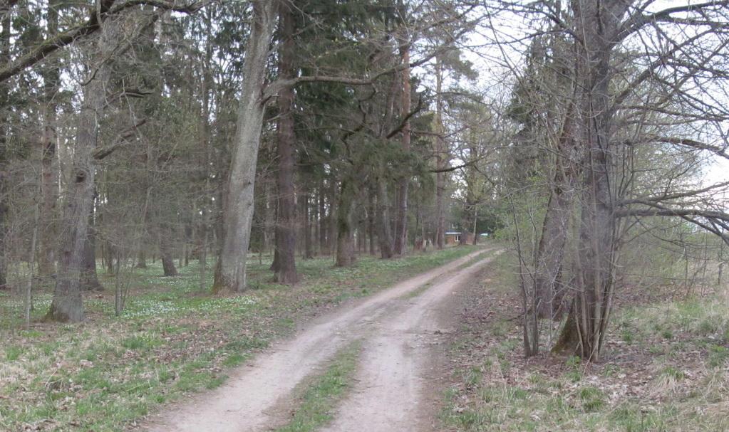 Витебские правоохранители задержали грабителя, который связали девушку и оставил в лесу