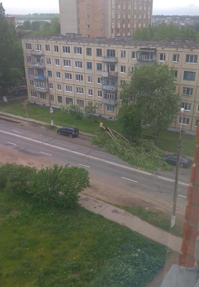 Вчера ветер валил деревья и срывал вывески в Витебске — фото