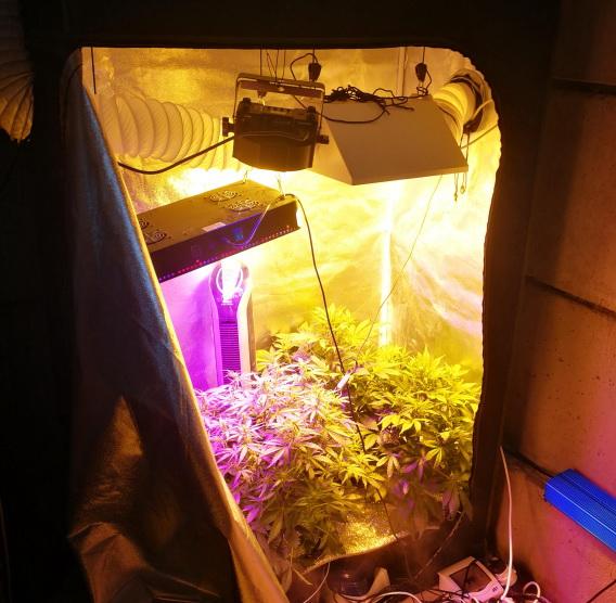 Выращивал дома марихуану видео продать семена конопляные