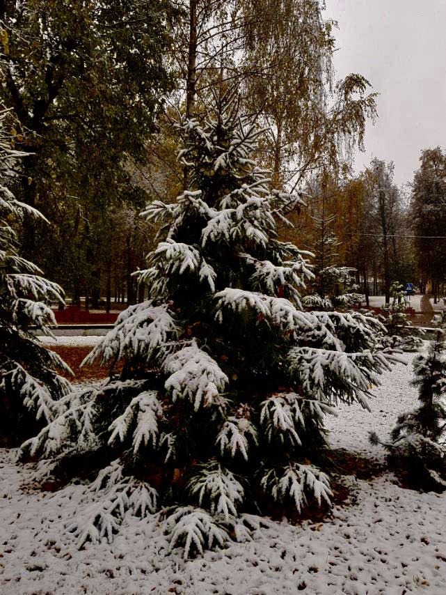 Фотофакт: в Витебске выпал первый снег