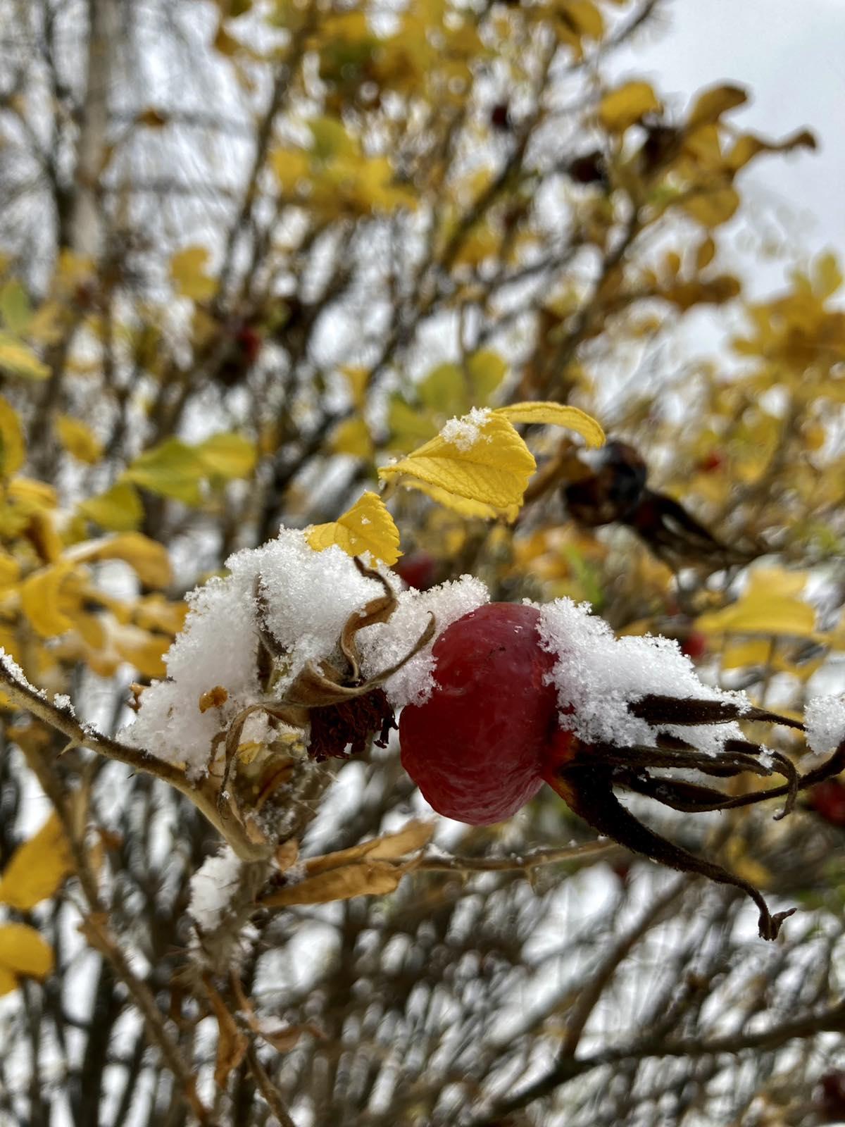Фотофакт. Снег в Витебске