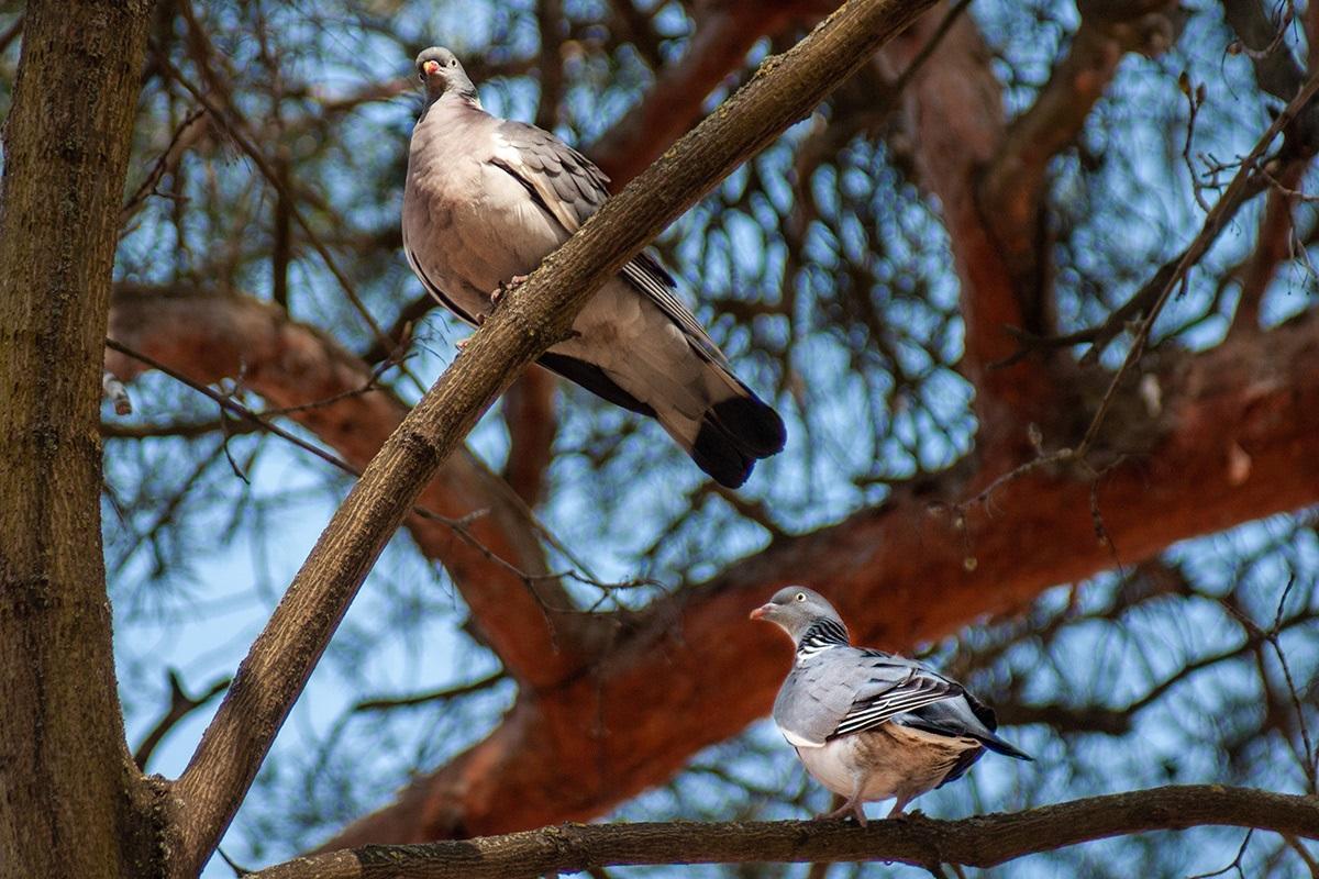 Птицы Юрьевой Горки